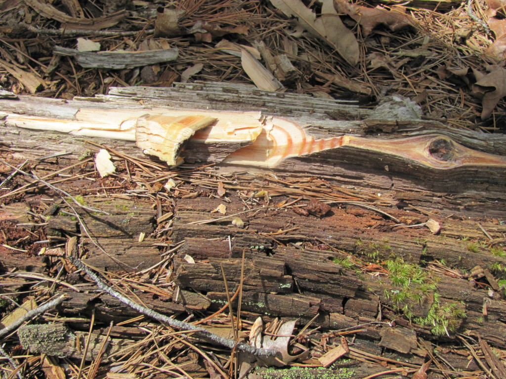 Fatwood from the stem, not just stump in some species.