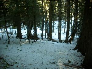 Photo 1 - cedar grove from above