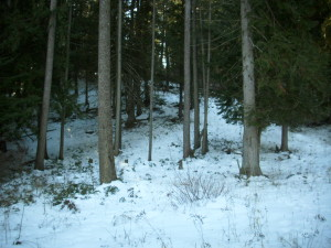 Photo 2 - same cedar grove from below