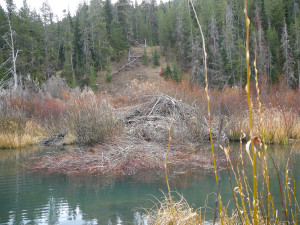 Beaver Lodge.  Photo:  George Michaud