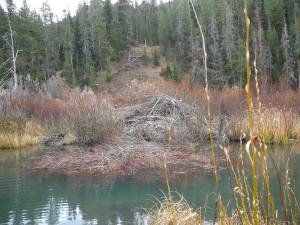 Beaver Lodge.  Photo:  George Michaud