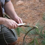 Harvesting the inner bark of White Pine for food and/or medicine of which participants got a sample.