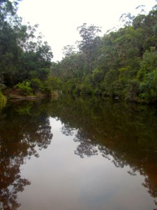 Campfire Creek