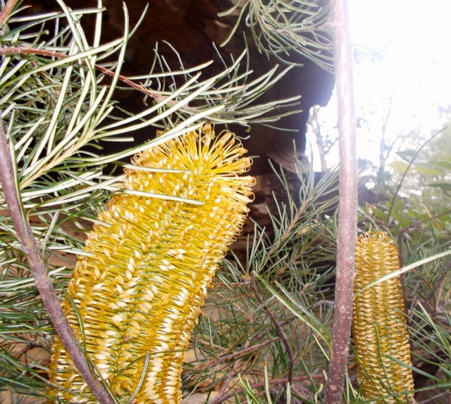 Local flora on our bush track.