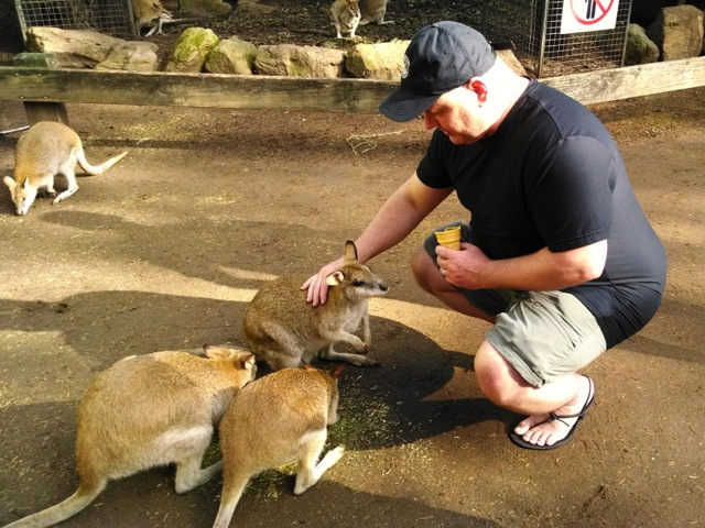 Wallaby.  Much cuter than the Kangaroo I ate the night before.