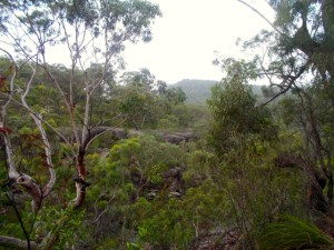 View of the Blue Mountains above Campfire Creek where our bush track started.