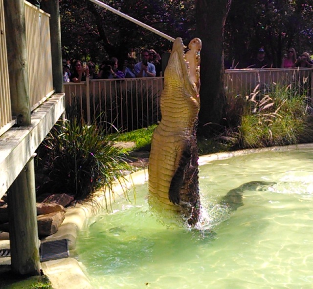 Touristry Croc Show.  Good cell phone picture.