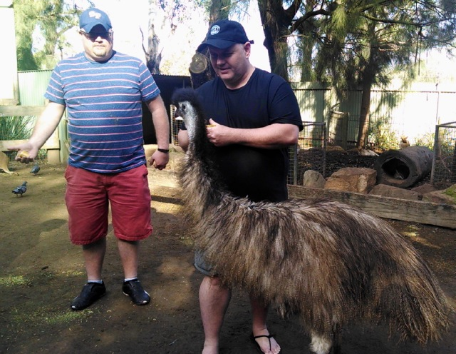 Hand feeding an emu.