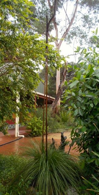 The grass tree with flower stalk at Muru Mittigar.