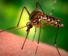 mosquito_sick